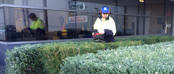 man trimming a hedge